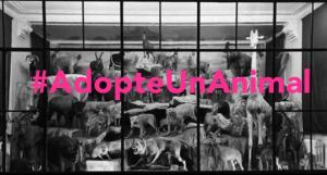 visuel adopte un animal